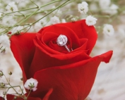 Lakes Ceremonies Red Rose and Ring